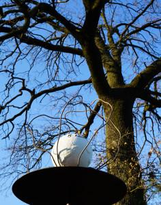 La voce degli alberi